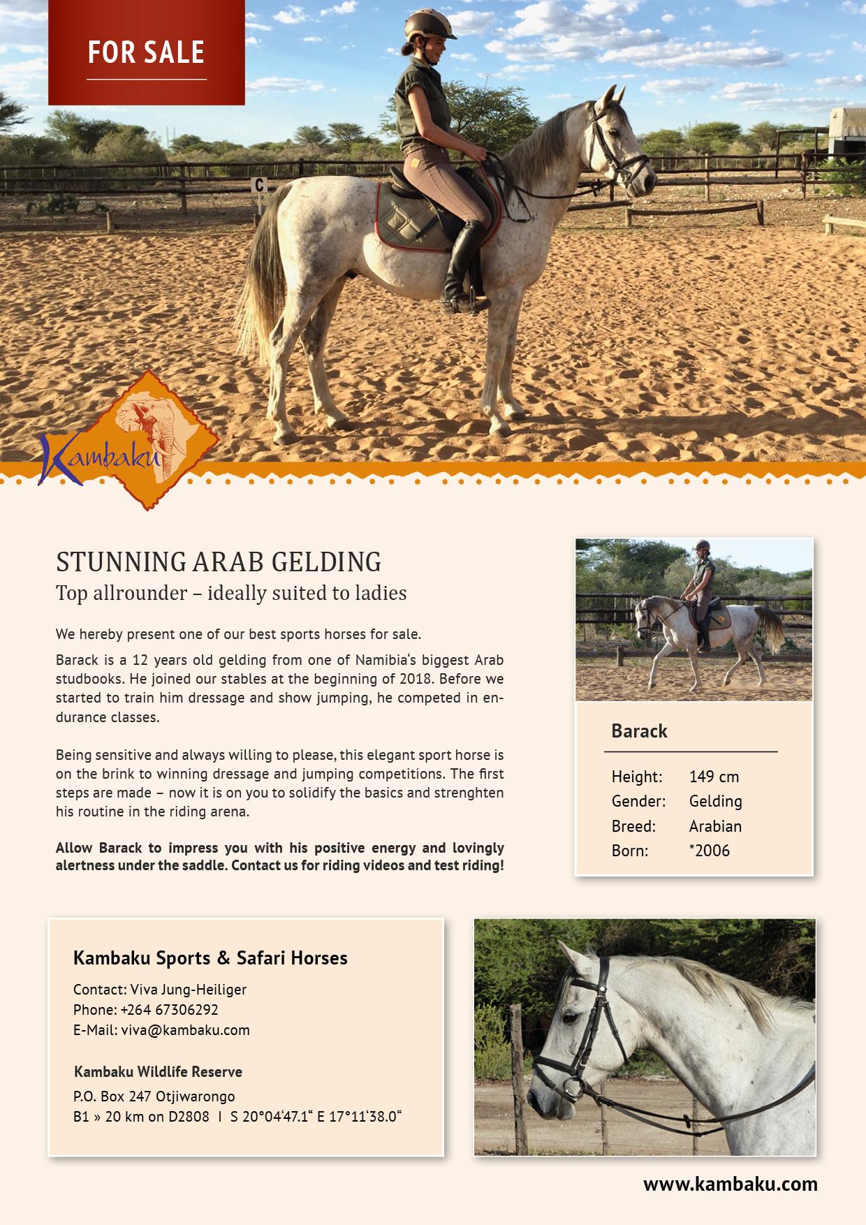Namibian Horse - Horses for Sale